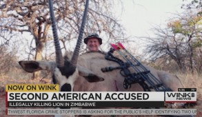 american accused of killing lion