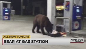 bear at gas station