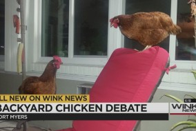 chickendebatethumb