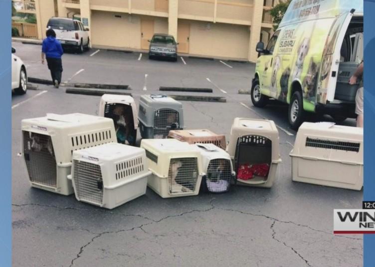 rescueddoggiesthumb
