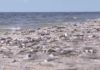 red-tide-dead-fish-wink-news