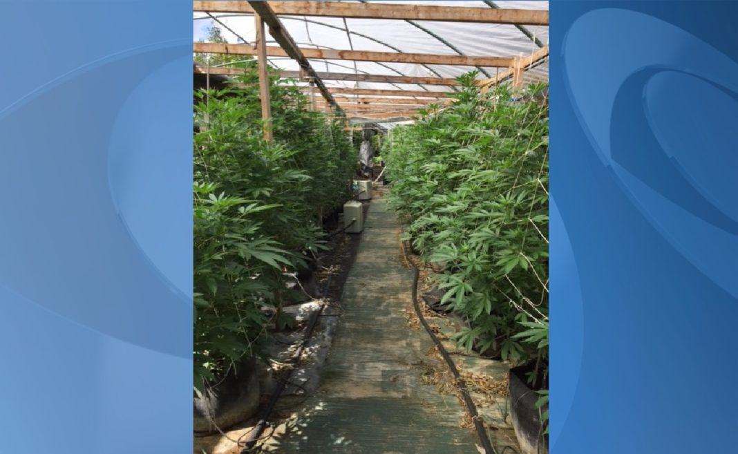 Fort Myers, Miami men busted for Okeechobee grow house