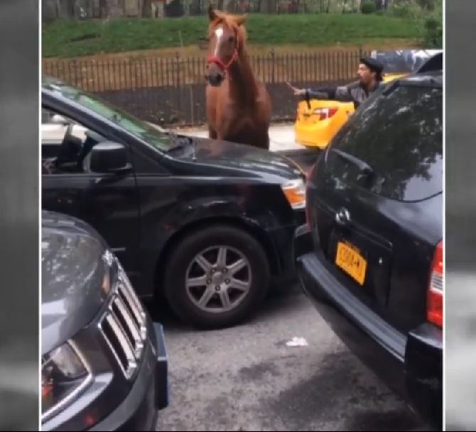 Carriage horse runs free in New York City