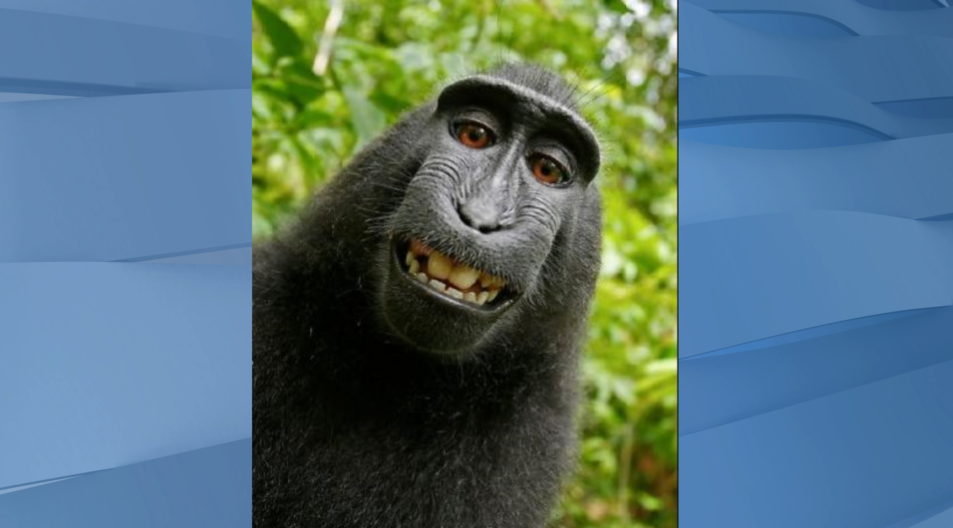 Battle over monkey selfie heads back to court