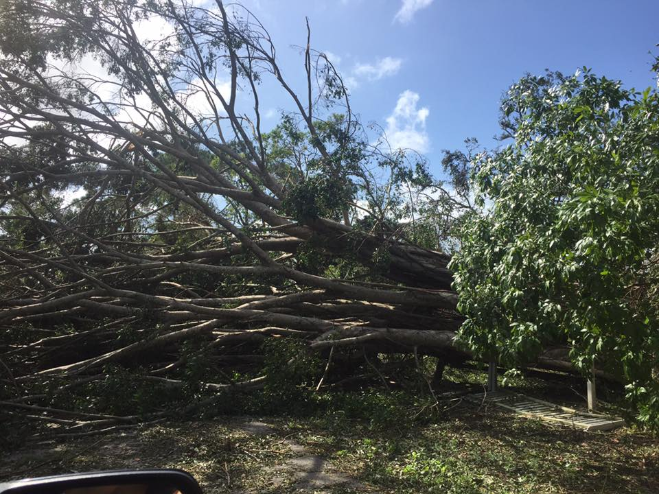 Guidelines for debris removal in Lee County