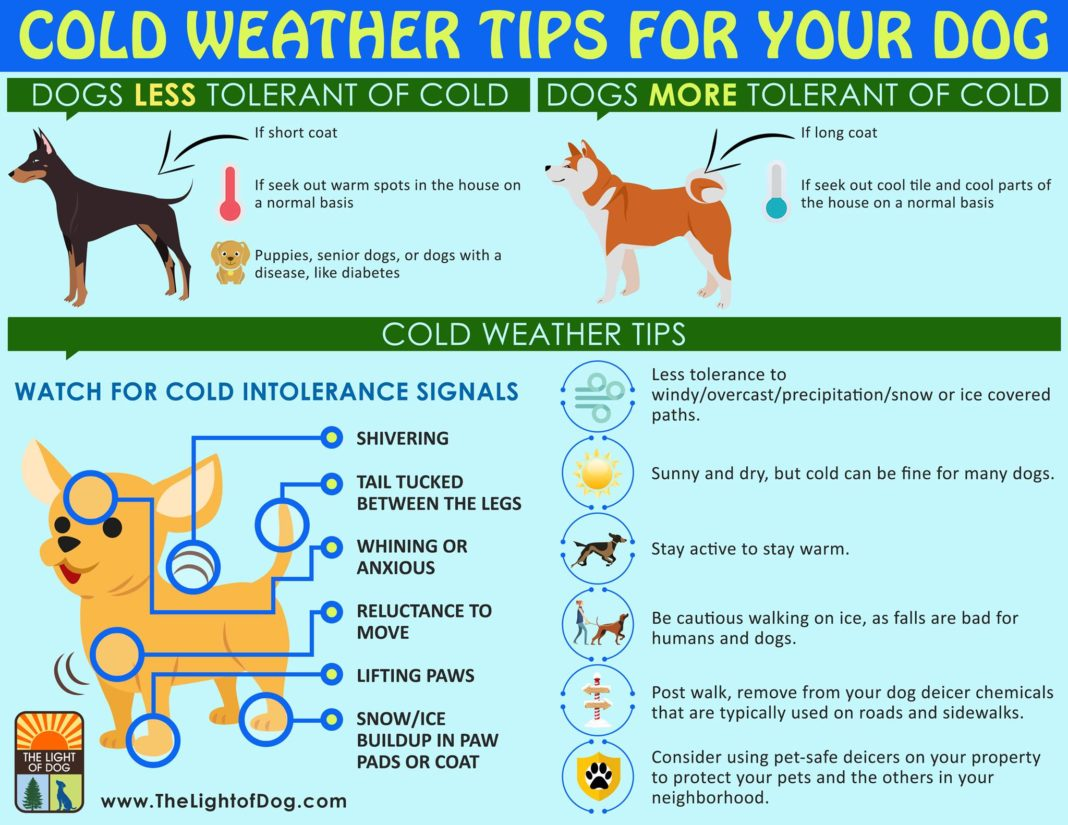 Cold Weather Tips Keeping Your Family And Pets Safe