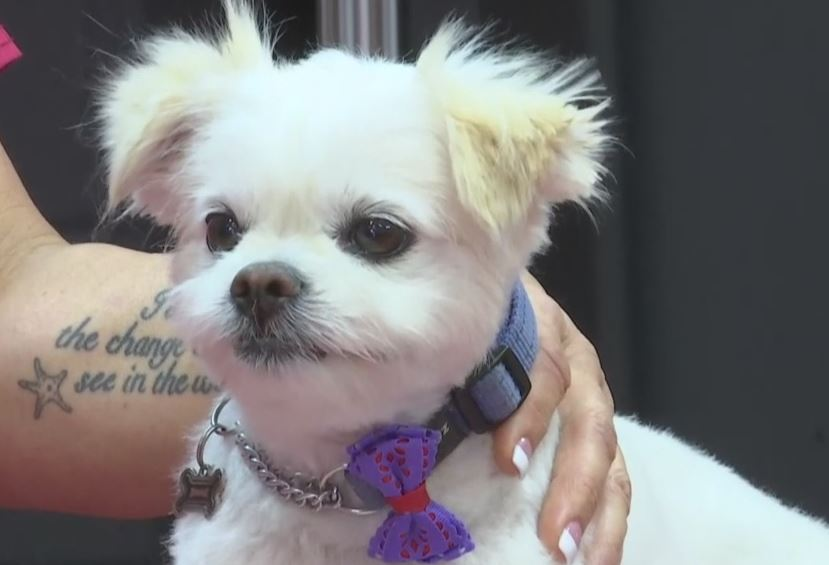 Fort myers pet groomer offers haircuts transparency solutioingenieria Images