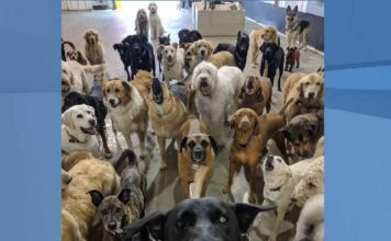Fort myers pet groomer offers haircuts transparency pack of dogs pose for worlds cutest selfie solutioingenieria Images