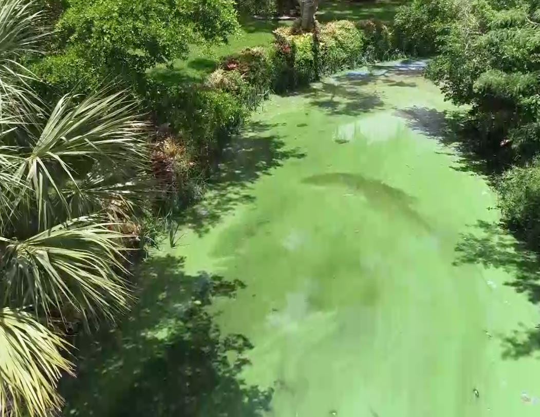 'We Don't Know What's In The Water': Algae Blooms Cover