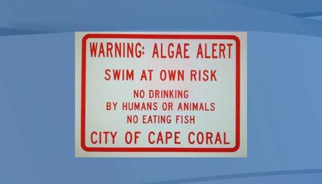 Algae prompts more 'no swimming' signs at Cape Coral Yacht Club