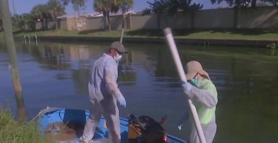 Algae cleanup resumes after delay due to money shortage
