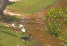 Remnants of human waste in Bimini Basin. Photo via WINK News.