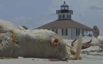 Red tide brings dead marine life on Florida beaches. Photo via WINK News.