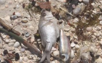 Dead fish on the shores. (WINK News photo)