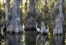 Everglades National Park. (CBS photo)