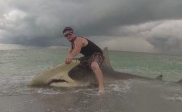 Man catches a shark. (WINK News photo)