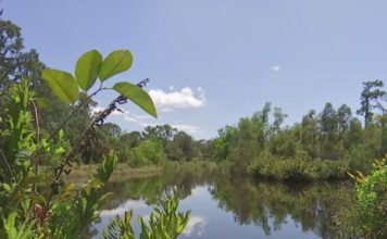 Portion of a site that may be a potential water quality research center. for FGCU. (WINK News photo)