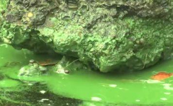Fertilizer runoff can contribute to blue-green algae. (WINK News photo)