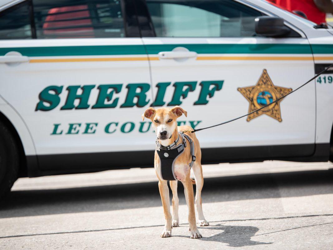 Deputy Chance. (Credit: LCSO)