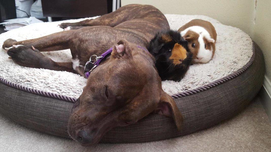 Napping dog. (Credit: CBS)
