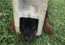 Dog stuck in cinder-block. (Credit: St. Johns County Fire Rescue)
