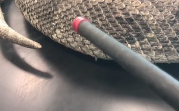 Python invasion could have lasting effects on Florida ecosystem