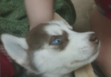 Puppy purchased from Craigslist by the Lehigh Acres family. (Credit: WINK News)