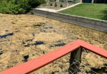 Some of the brownish-green gunk in a Cape Coral canal. (Credit: WINK News)