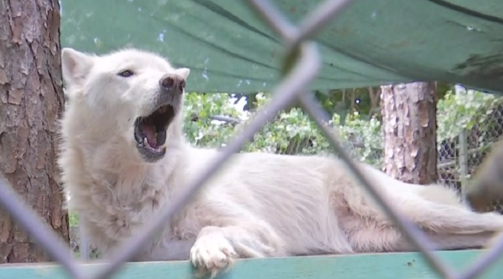 Shy Wolf Sanctuary gives back to Southwest Florida veterans