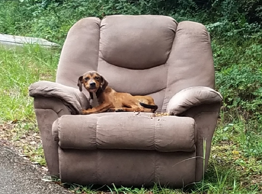 Puppy left in an arm chair on the side of the road. (Credit: CBS via Sharon Norton)