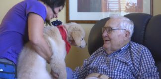 Veteran living in the care center at Vi at Bentley Village in North Naples pets a Golden PAWS Assistance Dog. (Credit: WINK News)