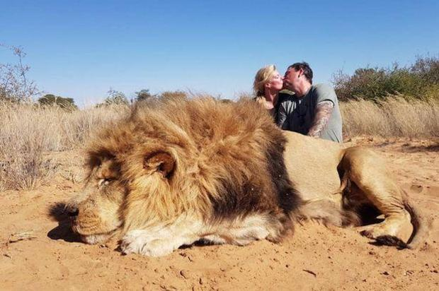 A Canadian couple poses for romantic photo with lion they shot and killed in South Africa. (Credit: CBS News)