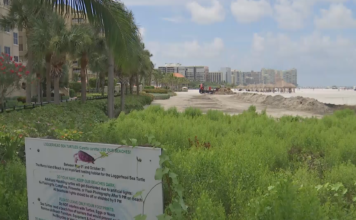 Estero River teeming with bacteria, lack of warnings for danger