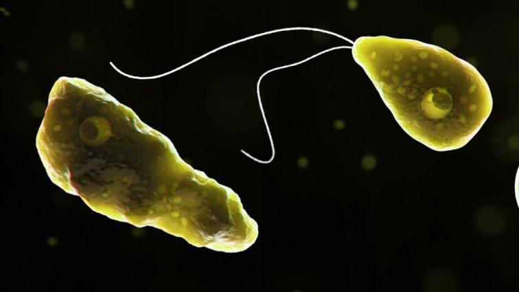 Naegleria fowleri, referred to as the brain-eating amoeba. (Credit: CBS)