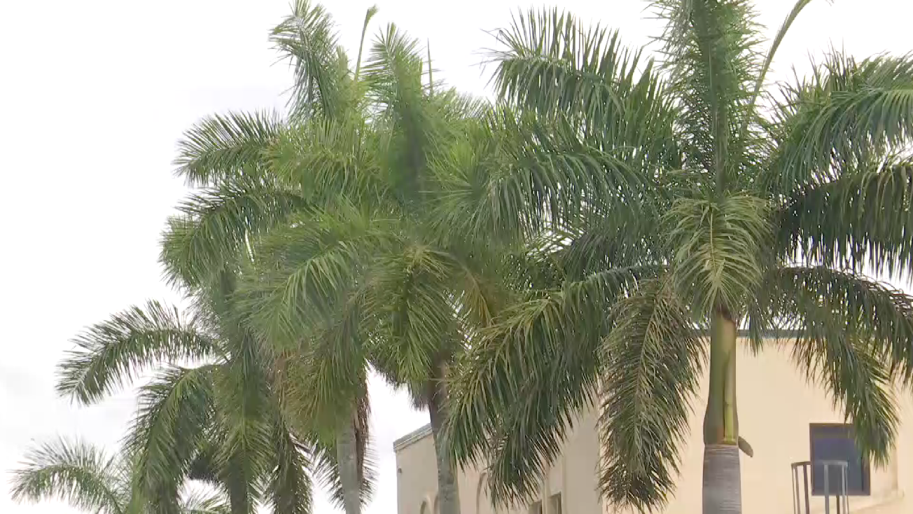 Florida is ditching palm trees to fight climate crisis
