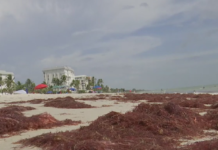 Red drift algae washes ashore on Naples Beach Monday, July 15, 2019. (Credit: WINK News)