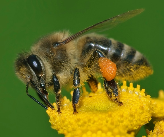 Ask the Curator: Bee there or Bee Square!