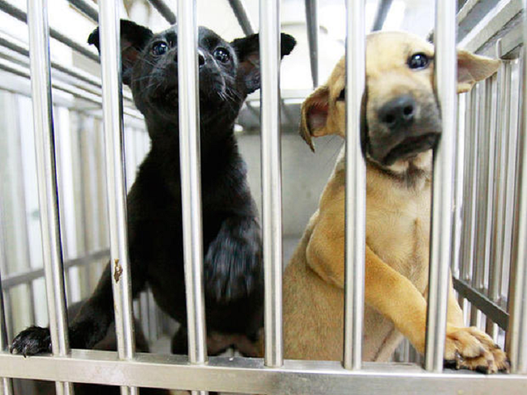 Dogs in a shelter. (Credit: CBS News)