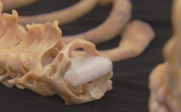 Human remains. (Credit: WINK News)