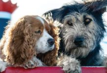 Rescue dog, Monte, on the right, to become Disney star. (Credit CBS News)