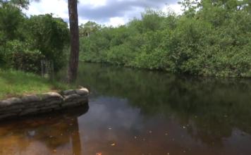 Estero River has alarming rates of fecal matter. (Credit: WINK News)