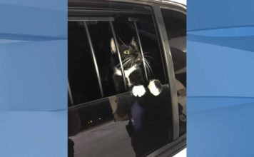 Small feline was the culprit behind the disturbing sounds that prompted the call. (Credit: Collier County Sheriff's Office)