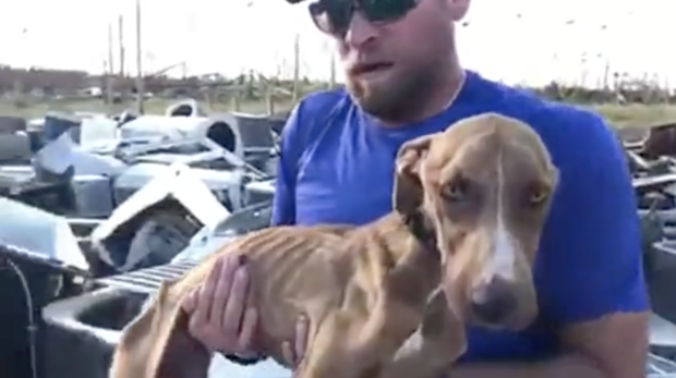Big Dog Ranch Rescue says a drone helped them find Miracle, a dog who survived about a month pinned under an air condition after Hurricane Dorian hit. (Credit: BIG DOG RANCH RESCUE)