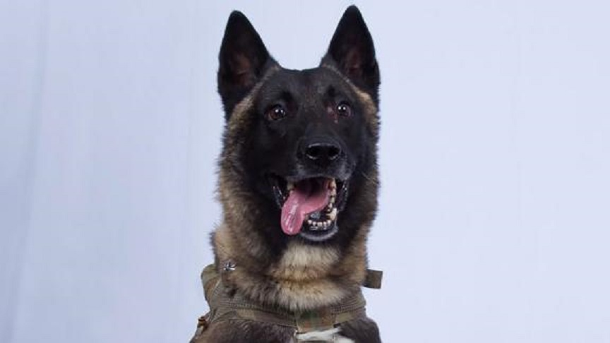 Conan, the heroic dog who helped chase down ISIS leader Abu Bakr al-Baghdadi. (Credit: CNN)
