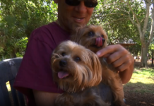 Steve Rigoni takes his two Yorkshire terriers, Veto and Vinny, with him everywhere he goes. (Credit: WINK News)