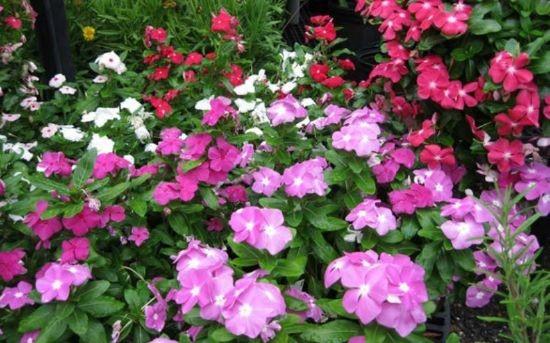 Garden Talk: Growing Great Annuals