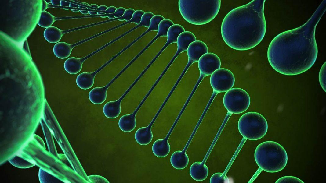 DNA strands illustration. (Credit: MGN)