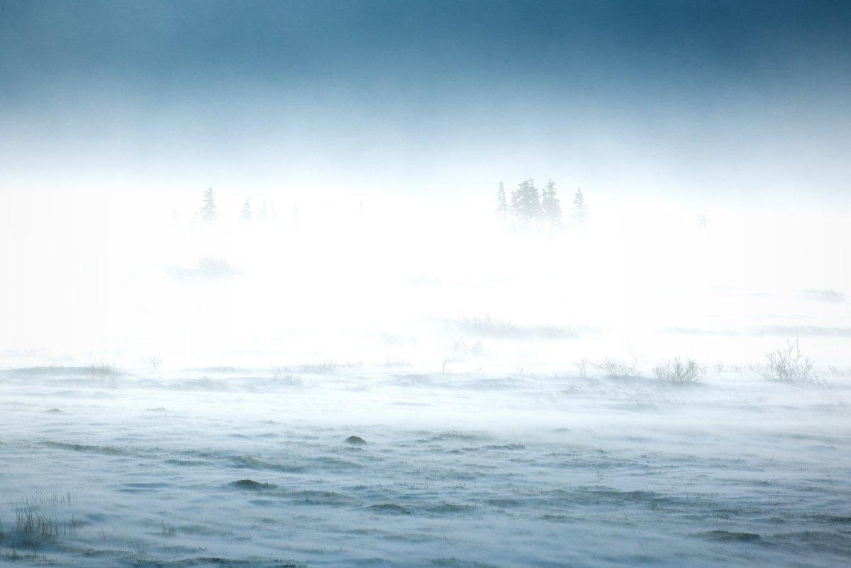 4 children were found alive after spending the night missing in rural Alaska during a blizzard. (Credit: CNN)