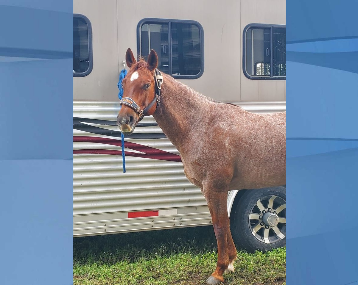 Whip, who was killed and had his meat extracted leaving only remains. Deputies ask anyone with information to call CCSO at 239-252-9300 or 239-775-8477. (Credit: Doria family)