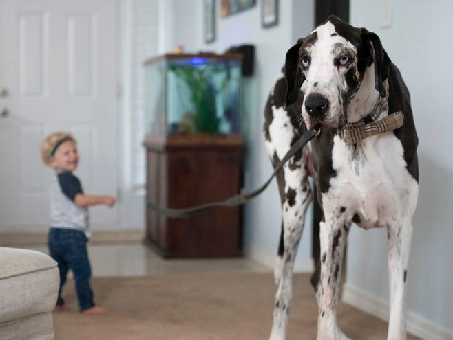 Biggest dog worlds 10 Largest